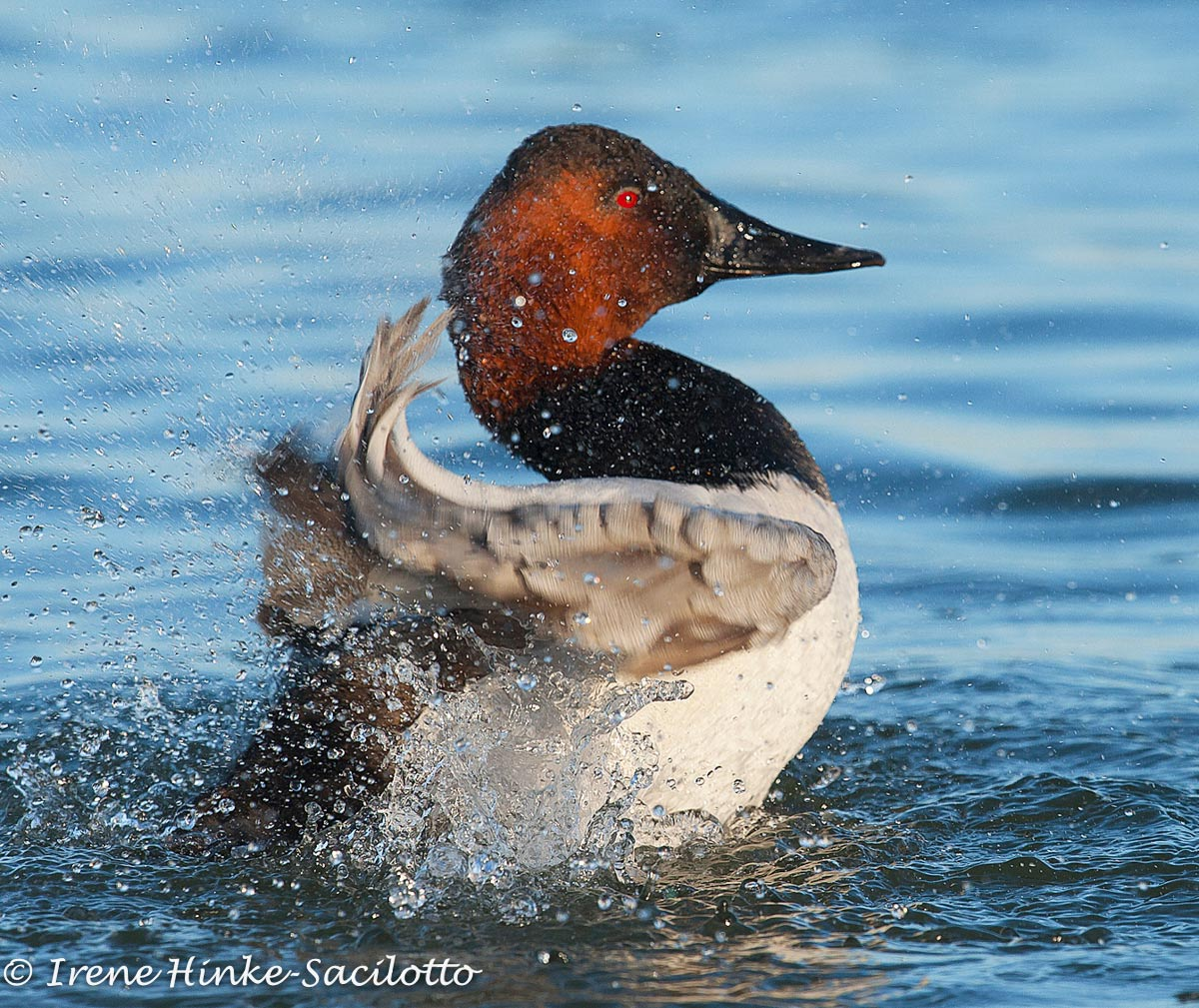 CanvasBack-word