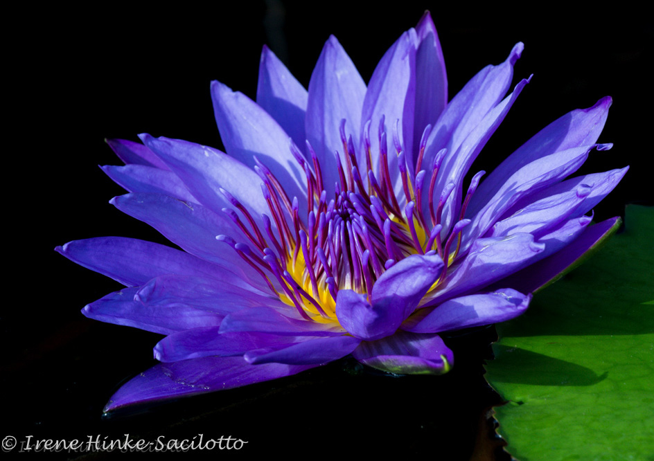 Lilypons Water Gardens Garden Photography Class Water Lilies Smell The Flowers Blog Pin Noli