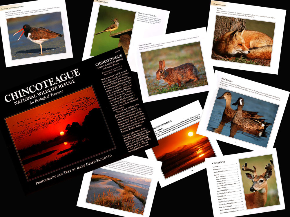 chincoteague book collage