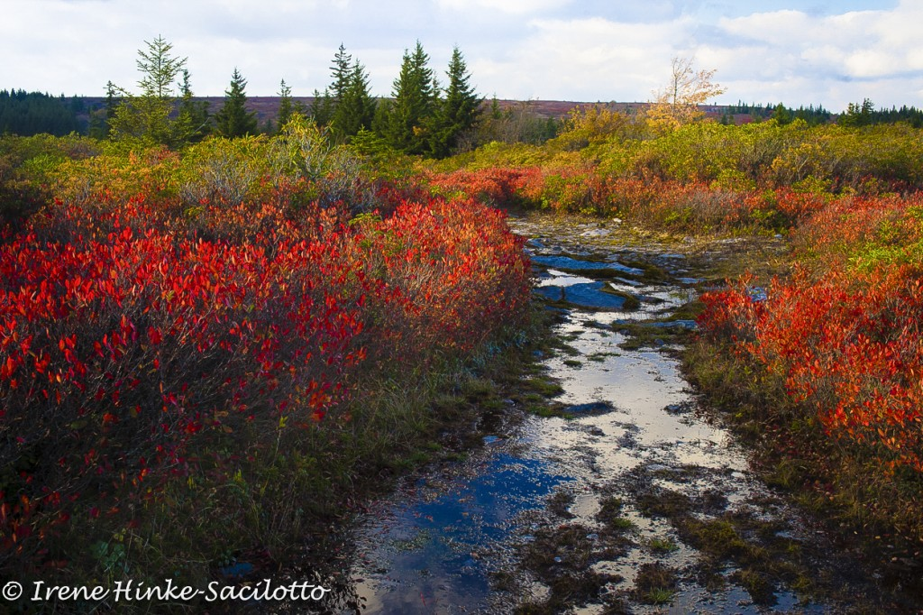 A photo tour of WV should include Dolly Sods.