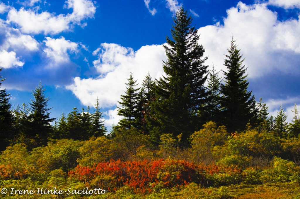 Photo tour of WV should include Dolly Sods.