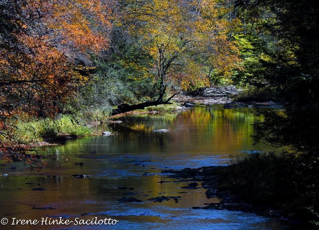 FLOATLEAVES-StreamReflection2-_CAN5475
