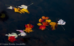 Autumn photo workshop in West Virginia offers many opportunities for creative photography.