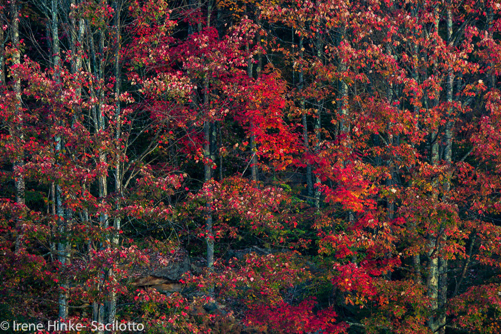 Trees with fall colors.