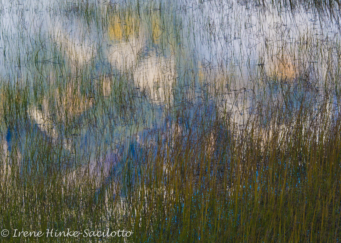 Reflections and grass in a pond.