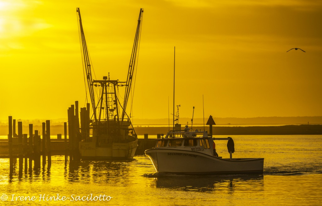 Fishing boat returning to Chincoteague