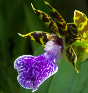 Orchids are on display in the tropical greenhouse at Norfolk Botanical Garden