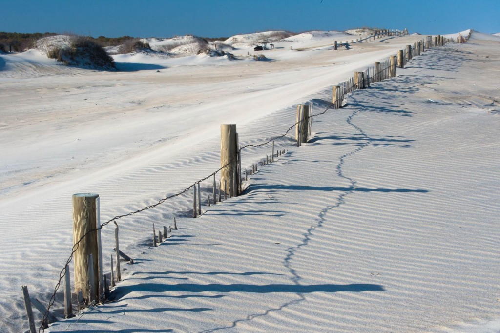 Beach and snow fence to help hold sand in place and protect the dunes.. Potential subjects for nature photography at Assateague