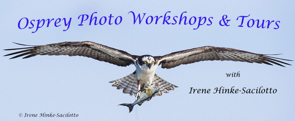 Osprey Photo Workshop