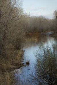 Bosque Wetlands