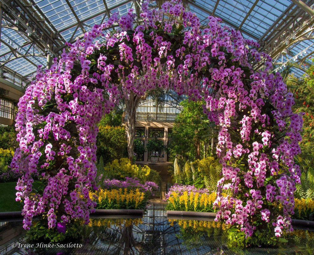 Orchid Arch at Longwood Gardens