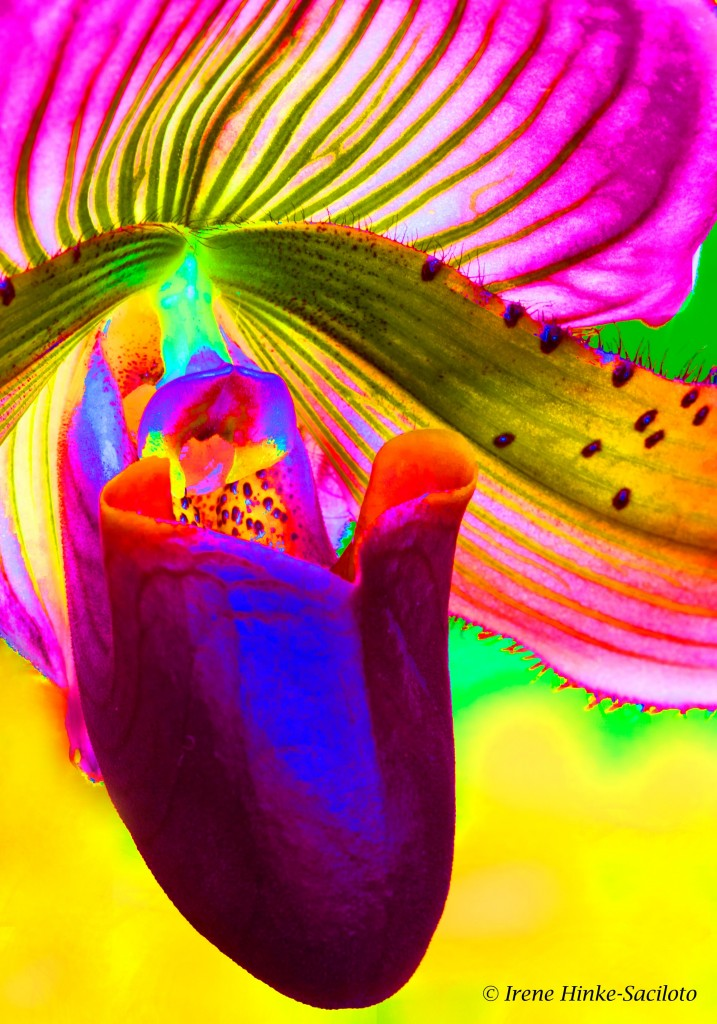 Orchid - modern art with high saturation