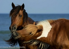 Pony_Kiss-