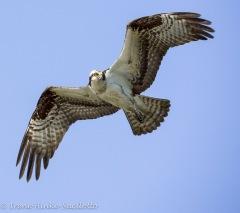 ospreylookback-5526web