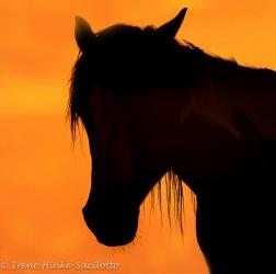 HorseSun-web2