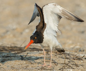 OysterWing-web3