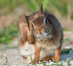 RabbitScratch-web2