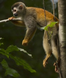 SquirrelMonkey_edited-1