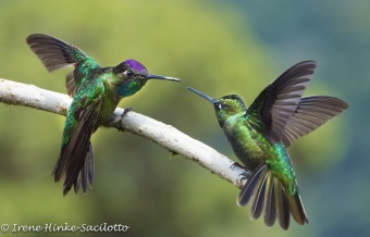 Hummingbird Beak to Beak Challenge