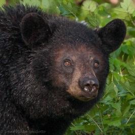 Bear-4936web2