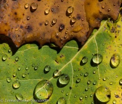 LeafDrops-4278web2