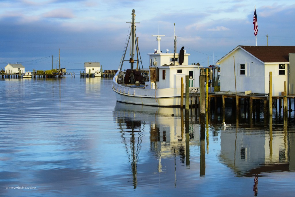 Buy Boat at Tangier Island for transfer of crabs