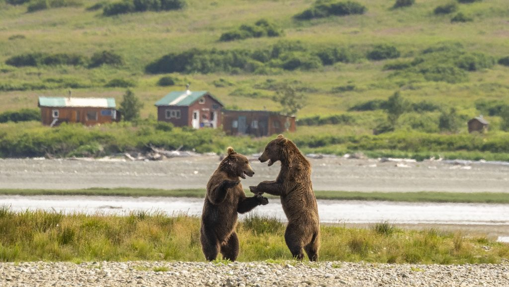 Young bear sparing