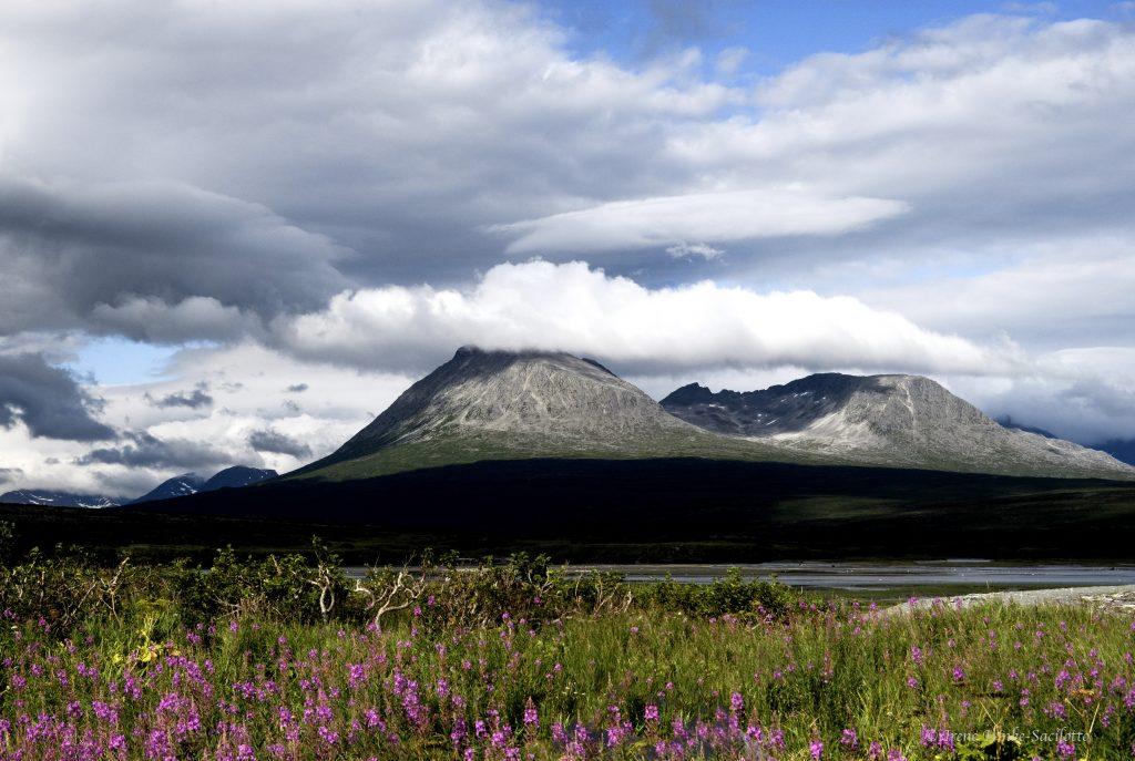Aleutian chain and fireweed.