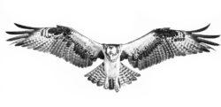 Osprey Photo logo